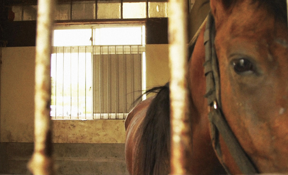 horses of fukushima 02